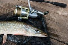 Mensonges d'eau douce d'équipement de brochet et de pêche sur le filet de pêche noir Image libre de droits