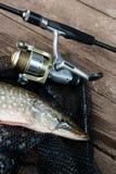 Mensonges d'eau douce d'équipement de brochet et de pêche sur le filet de pêche noir Photographie stock