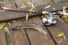 Mensonges d'eau douce d'équipement de brochet et de pêche sur le fond en bois Images stock