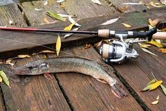 Mensonges d'eau douce d'équipement de brochet et de pêche sur le fond en bois Photographie stock