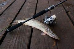 Mensonges d'eau douce d'équipement de brochet et de pêche sur le fond en bois Photo libre de droits