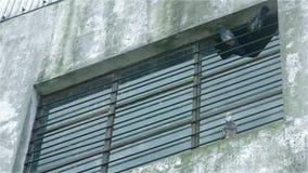 MENSONGES DE PIGEONS DANS UNE VIEILLE FEN?TRE clips vidéos
