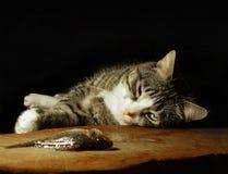 Mensonges et regards de chat aux poissons Image stock