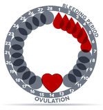 Menstrual cycle. Graphic. Average  days. Bleeding period and ovulation. Beautiful abstract design. Bleeding days- drop symbol; ovulation- heart vector illustration