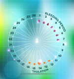 Menstrual cycle. Wheel. Average . Bleeding period and ovulation stock illustration