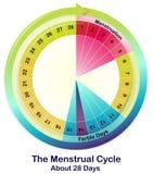 Menstrual cykl royalty ilustracja