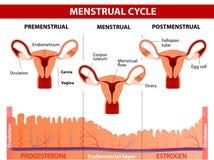 Menstruations- cirkulering vektor illustrationer
