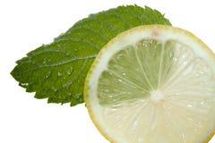 Menta de limón fotografía de archivo libre de regalías