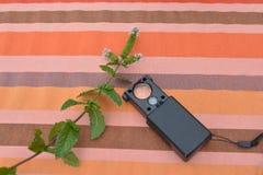 Menta e apparato per lo studio delle erbe Fotografia Stock