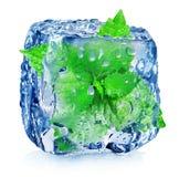 Menta en cubo de hielo Foto de archivo libre de regalías