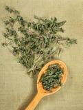 Menta, erbe secche Medicina di erbe, erbe medicinali di fitoterapia Fotografia Stock