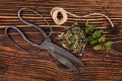 Menta fresca e secco culinaria aromatica delle erbe, Fotografia Stock