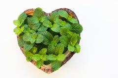 Menta fresca nella forma di legno del cuore del piatto su backgroun di legno bianco fotografia stock