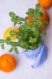 Menta fresca in un vaso della pianta Fotografie Stock Libere da Diritti