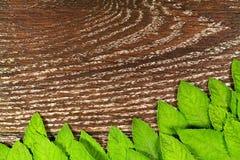 Menta fresca verde OM la tabla de madera Foto de archivo