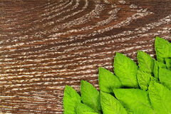 Menta fresca verde OM la tabla de madera Fotos de archivo libres de regalías