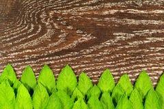 Menta fresca verde OM la tabla de madera Imagenes de archivo