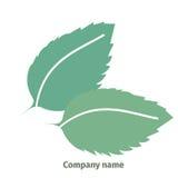 Menta Insignia para la compañía Hojas de menta aisladas en el fondo blanco Fotos de archivo