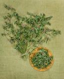 Menta, menta verde, menta piperita Erbe secche Medicina di erbe, phytot Fotografia Stock