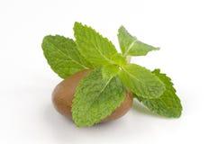 Menta piperita, salvia, menta della cucina, Marsh Mint (cordifolia Opiz della menta.) Immagini Stock
