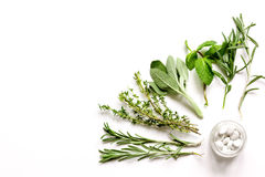 Menta, sabio, romero, tomillo - fondo del blanco del aromatherapy Imagenes de archivo