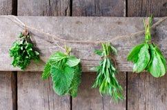 Menta, salvia, estragone e spinaci Immagine Stock