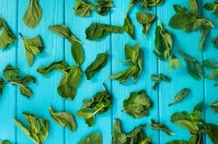 Menta secca sui precedenti di legno blu Fotografia Stock Libera da Diritti