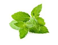 Menta verde della foglia su fondo bianco Fotografia Stock Libera da Diritti