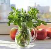 Menta verde fresca en la luz del sol por la mañana Fotografía de archivo libre de regalías