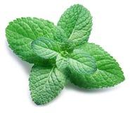 Menta verde o menta en el fondo blanco Visión superior fotografía de archivo