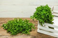 Menta verde su una tavola di legno Fotografie Stock