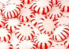 Mentas rojas Foto de archivo libre de regalías