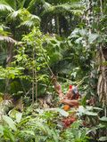Mentawai shaman hunting in the jungle royalty free stock photos
