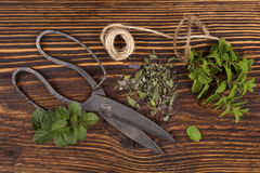 Mentha. Aromatic culinary herbs, mint. Royalty Free Stock Images