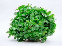Mentha haplocalyx Briq Royalty Free Stock Photo