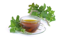 Mentha herbaciany citrata 02 Fotografia Stock