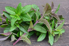 Mentha piperita leaves on wooden background Stock Photography