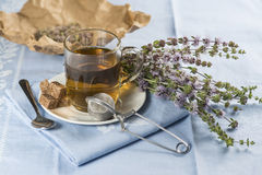 Mentha pulegium infusion Royalty Free Stock Photo