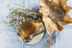 Mentha pulegium infusion Stock Photos