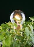 menthe de lumière d'ampoule photo libre de droits