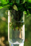 Menthe fraîche pour des cocktails dans un becher en verre transparent Menthe pour des mojitos sur un fond naturel Photographie stock libre de droits