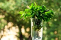 Menthe fraîche pour des cocktails dans un becher en verre transparent Menthe pour des mojitos sur un naturel Photographie stock libre de droits
