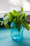 Menthe fraîche prête pour un mojito Images stock