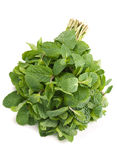 Menthe verte fraîche d'herbe image stock