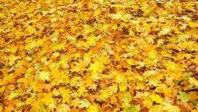 Mentira das folhas do amarelo do outono na terra fotos de stock