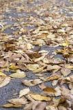 mentira das folhas na estrada Foto de Stock Royalty Free