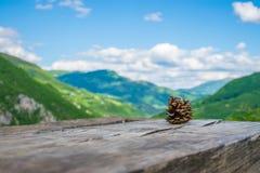 Mentira de dois cones do pinho em um log Fotografia de Stock