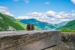 Mentira de dois cones do pinho em um log Imagem de Stock Royalty Free