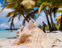 Mentira de dos anillos de bodas en la cáscara La playa, isla de Saona, Dom Imagen de archivo libre de regalías