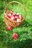 Mentira de duas maçãs na grama verde Fotografia de Stock Royalty Free